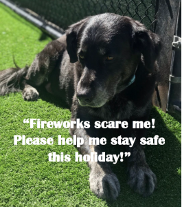 Keeping Your Pet Safe and Healthy this Fourth of July